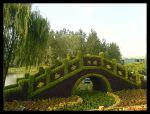 Topiario de un puente de musgo de sphagnum (China)