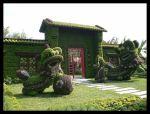 Escena de topiarios de dragones de musgo de sphagnum en China