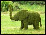Topiario de Cría de Elefante de musgo de sphagnum (Francia)