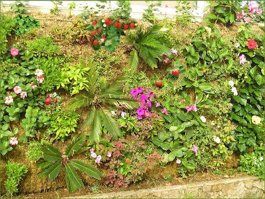 Cultive fresas y flores en su muro verde for Plantas muro verde