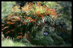 """Escultura de Susan Hill : Estupenda """"Cabeza del Gigante"""" en el camino arbolado de los jardines perdidos de Heligan."""