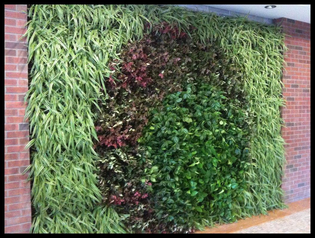 Muro verde dise ado construcciones verdes for Plantas para muros verdes verticales