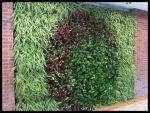 Muro verde Diseñado