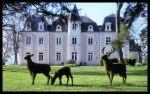 3 animales del bosque frente al castillo (Francia)