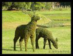 """Topiarios de un ciervo y una cierva por """"Los Jardines de Blandy"""" (Francia)"""