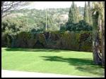 Muro végétal en Ramatuelle cerca de St Tropez (France)
