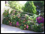 Muro verde florido. (Francia)