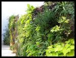 Muro verde con musgo de Sphagnum (Francia)