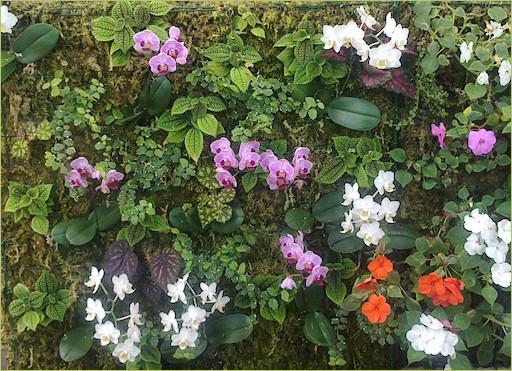 Muro verde con sphagnum y orquídeas