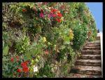 Muro verde con musgo de Sphagnum, plantas y flores