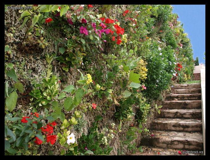 Muro verde con musgo de sphagnum plantas y flores for Plantas muro verde