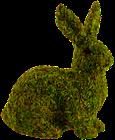 Conejo con musgo de sphagnum
