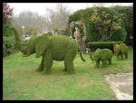 Topiarios figurando una familia de elefantes