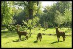 Ciervo, cierva y el cervatillo en el bosque de Millet (Francia)