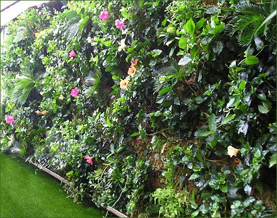 Muro verde en el VIP de St. Tropez!