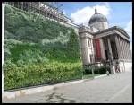 Muro vegetal en Trafalgar Square en Londres 2 (Inglaterra)