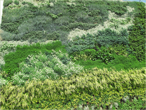 Muro verde Weybrigde-London