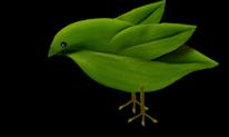 Ave verde