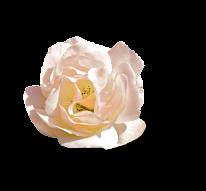 Flor preciosa